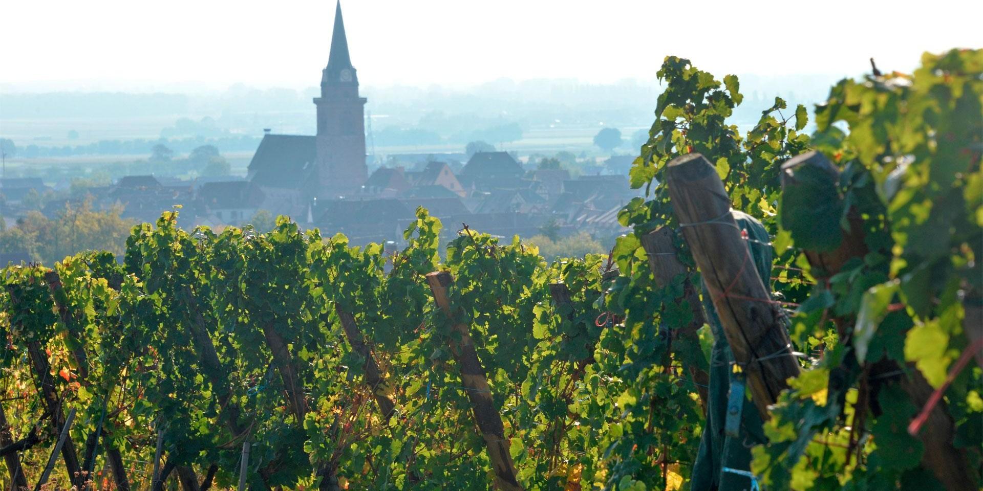 Bergheim depuis les vignes d'Alsace